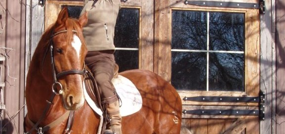 yoga-on-horseback